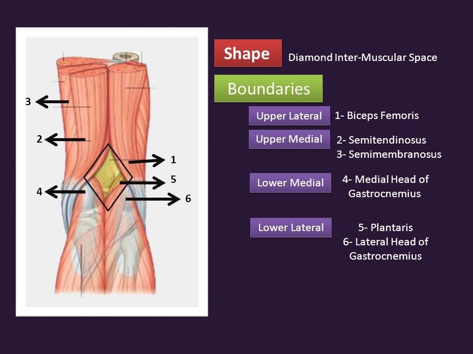Shape Boundaries Diamond Inter-Muscular Space 3 Upper Lateral