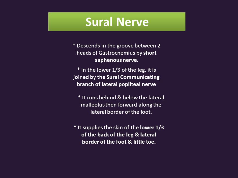Sural Nerve * Descends in the groove between 2 heads of Gastrocnemius by short saphenous nerve.