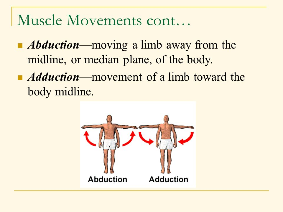 Muscle Movements cont…