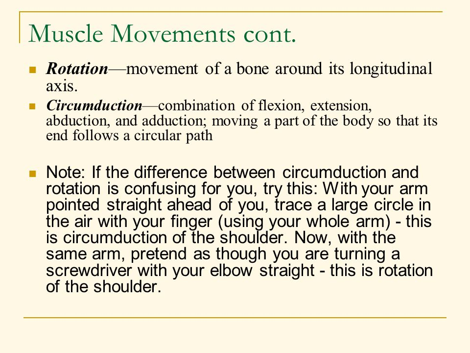 Muscle Movements cont. Rotation—movement of a bone around its longitudinal axis.