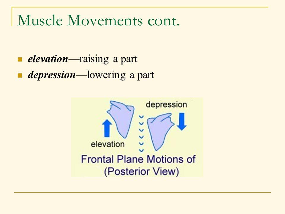 Muscle Movements cont. elevation—raising a part