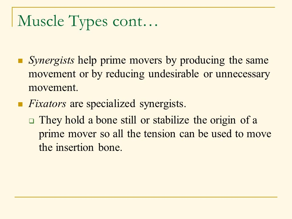 Muscle Types cont… Synergists help prime movers by producing the same movement or by reducing undesirable or unnecessary movement.