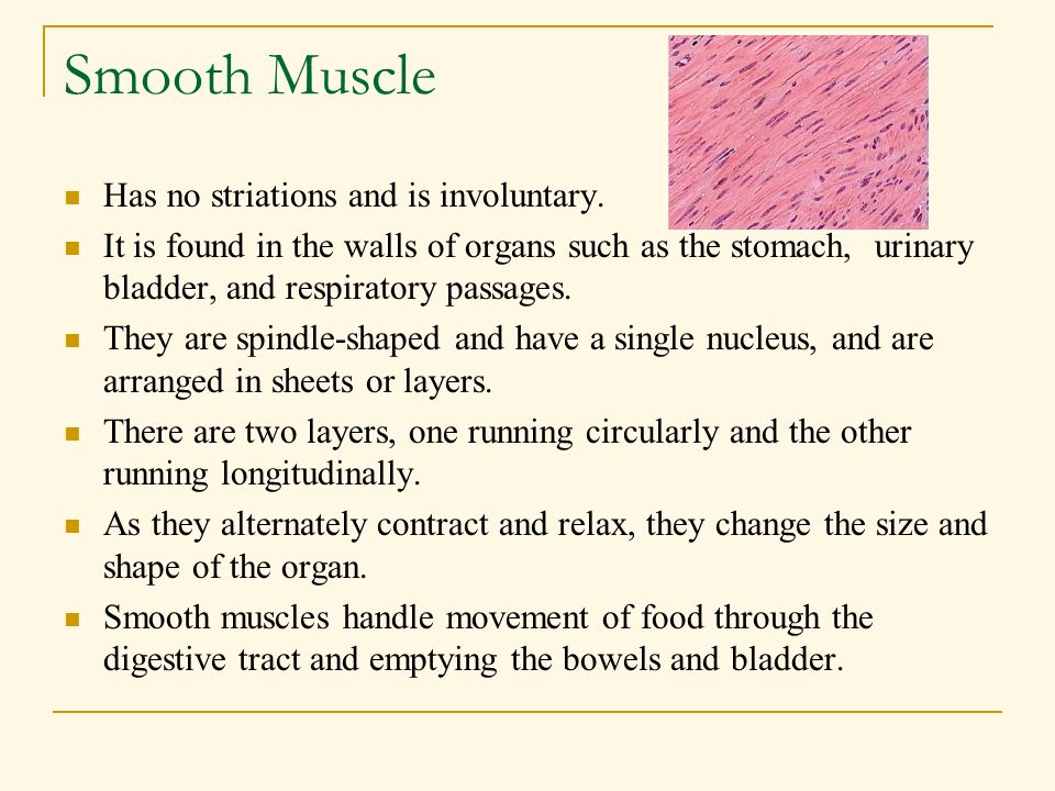 Smooth Muscle Has no striations and is involuntary.