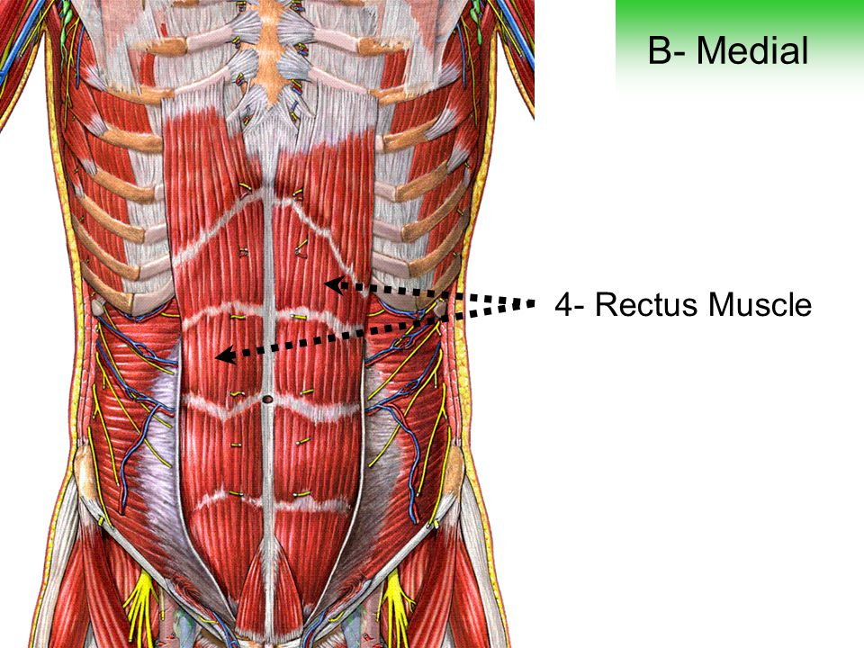 B- Medial 4- Rectus Muscle