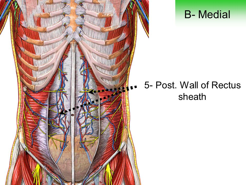 5- Post. Wall of Rectus sheath