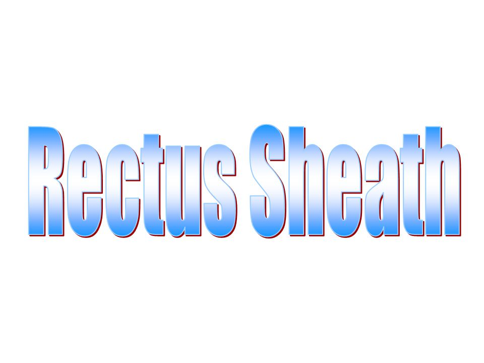 Rectus Sheath