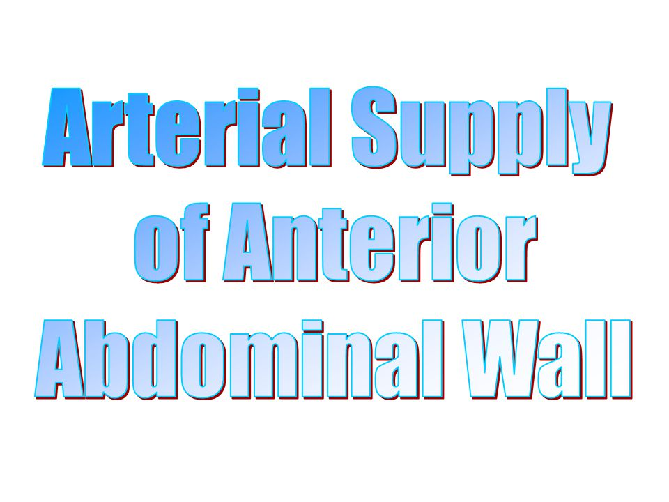 Arterial Supply of Anterior Abdominal Wall