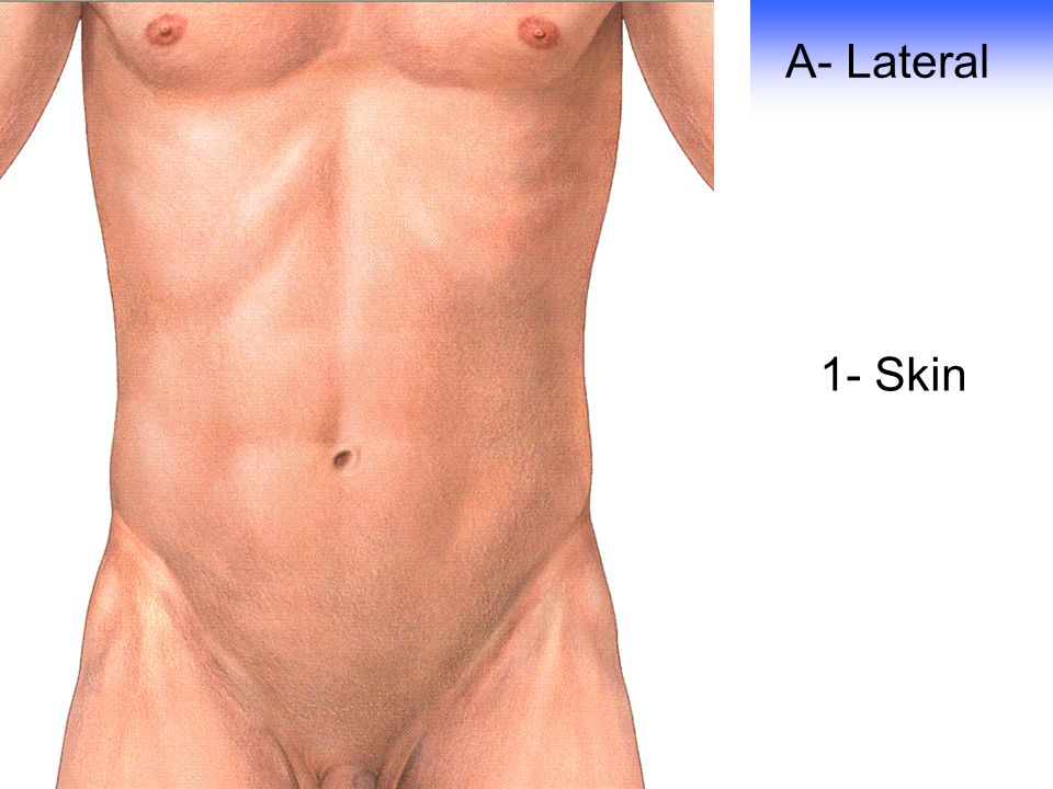 A- Lateral 1- Skin