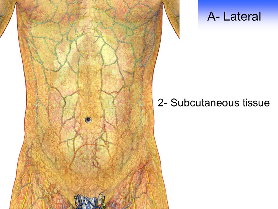 A- Lateral 2- Subcutaneous tissue