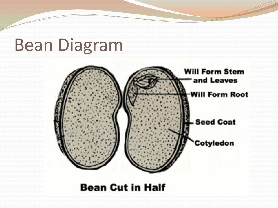 Bean Diagram
