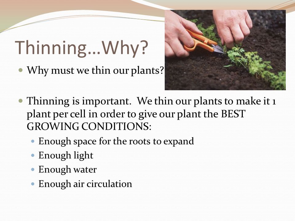 Thinning…Why Why must we thin our plants