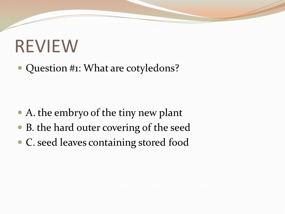REVIEW Question #1: What are cotyledons