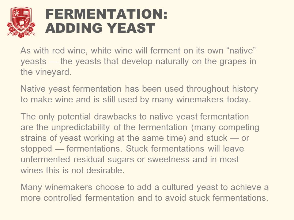 FERMENTATION: ADDING YEAST