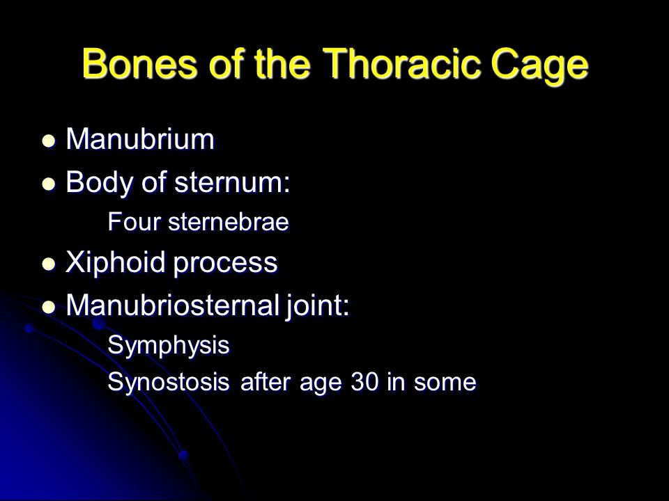 Bones of the Thoracic Cage