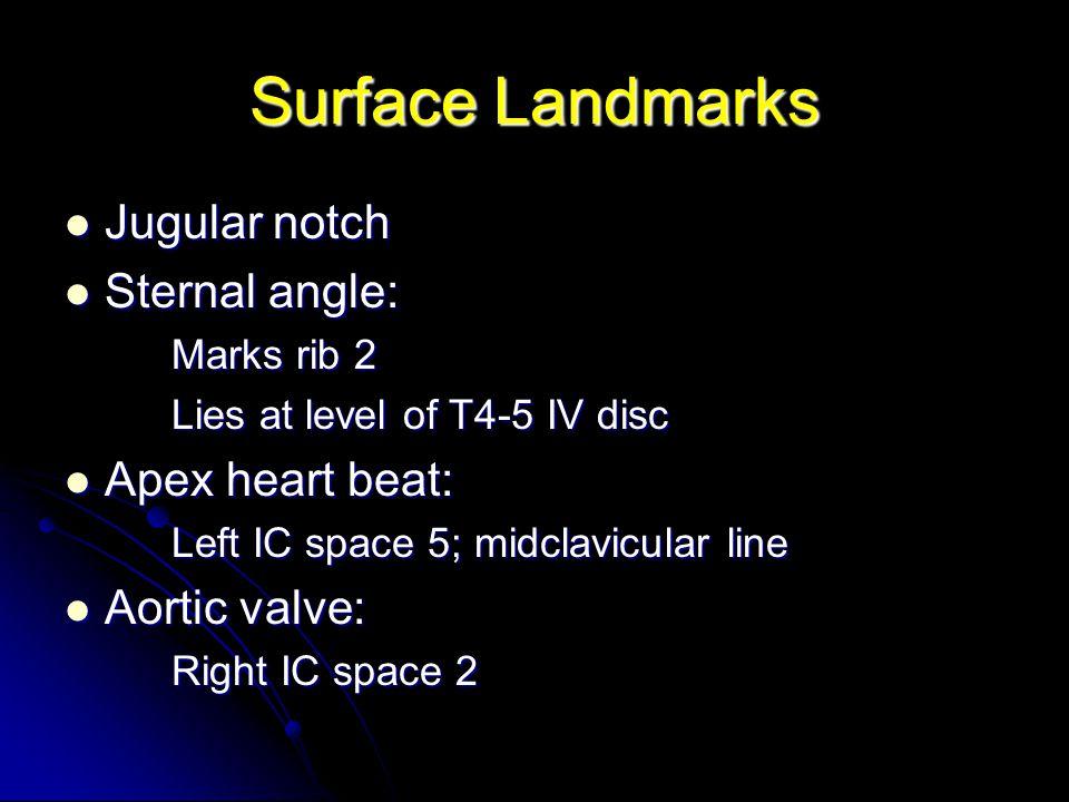 Surface Landmarks Jugular notch Sternal angle: Apex heart beat: