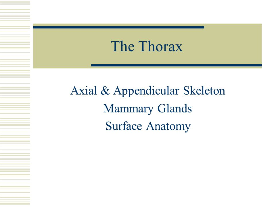 Axial & Appendicular Skeleton Mammary Glands Surface Anatomy