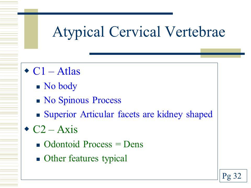 Atypical Cervical Vertebrae