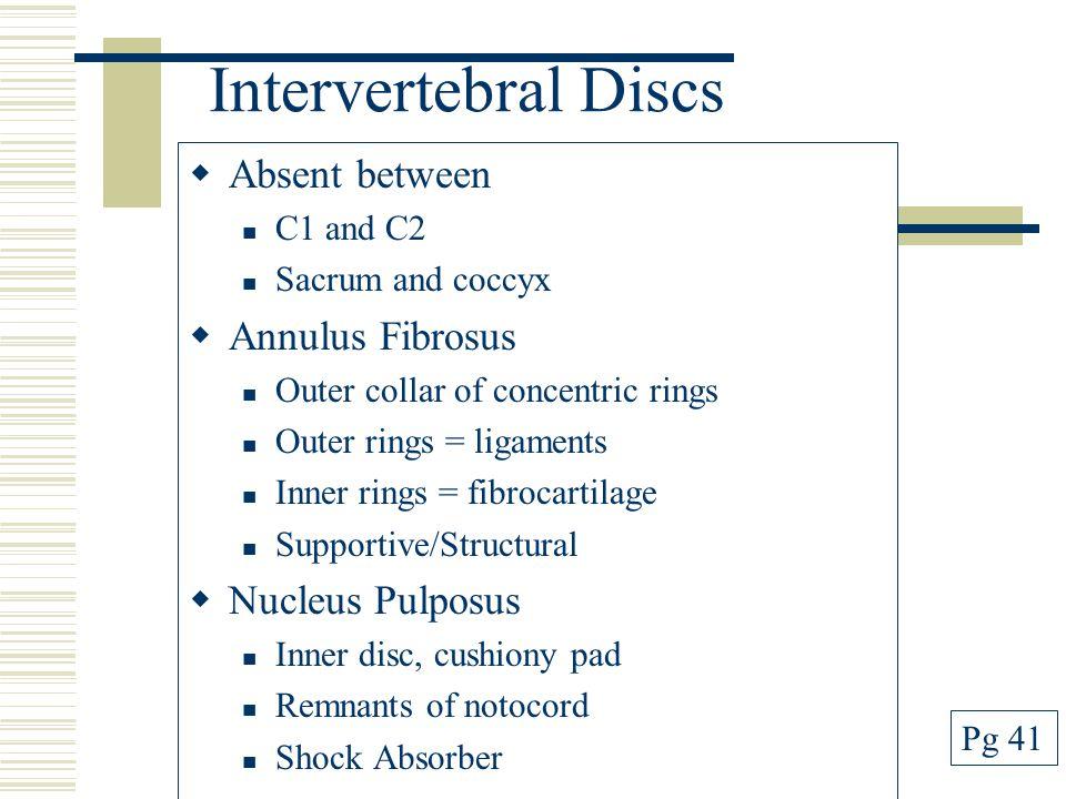 Intervertebral Discs Absent between Annulus Fibrosus Nucleus Pulposus