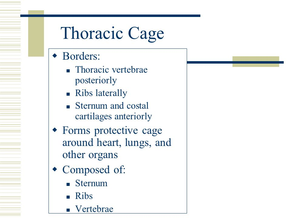 Thoracic Cage Borders:
