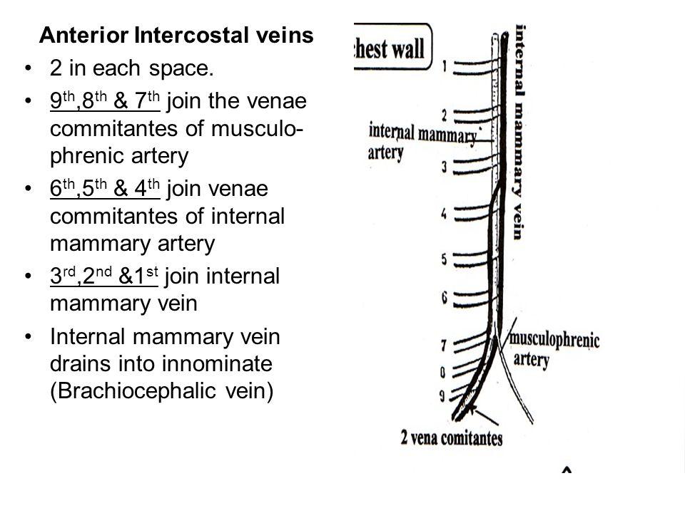 Anterior Intercostal veins