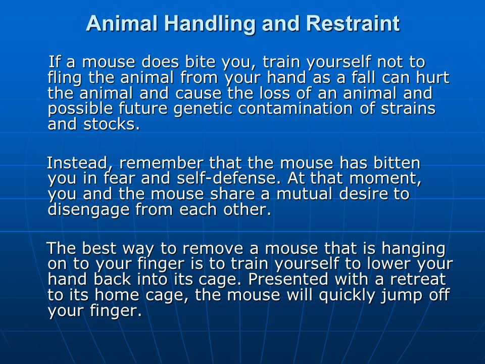 Animal Handling and Restraint