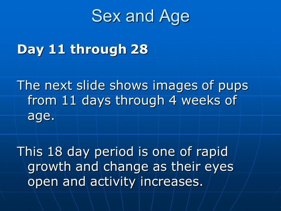 Sex and Age Day 11 through 28. The next slide shows images of pups from 11 days through 4 weeks of age.