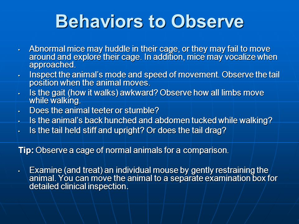 Behaviors to Observe