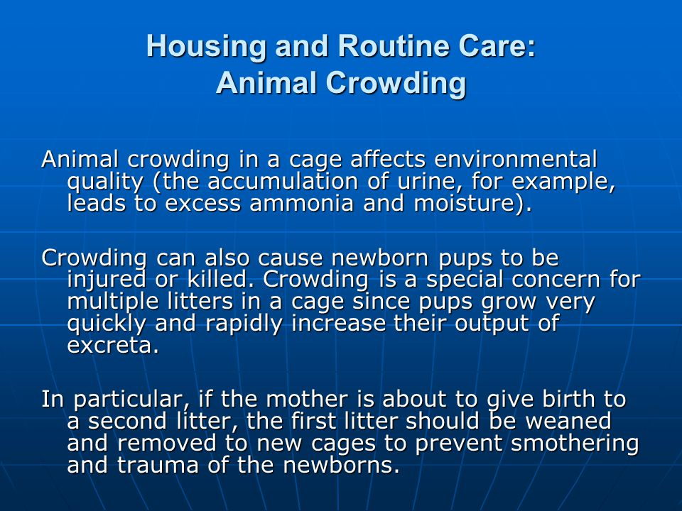 Housing and Routine Care: Animal Crowding
