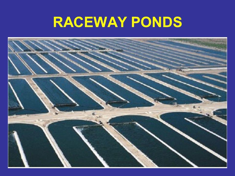 RACEWAY PONDS