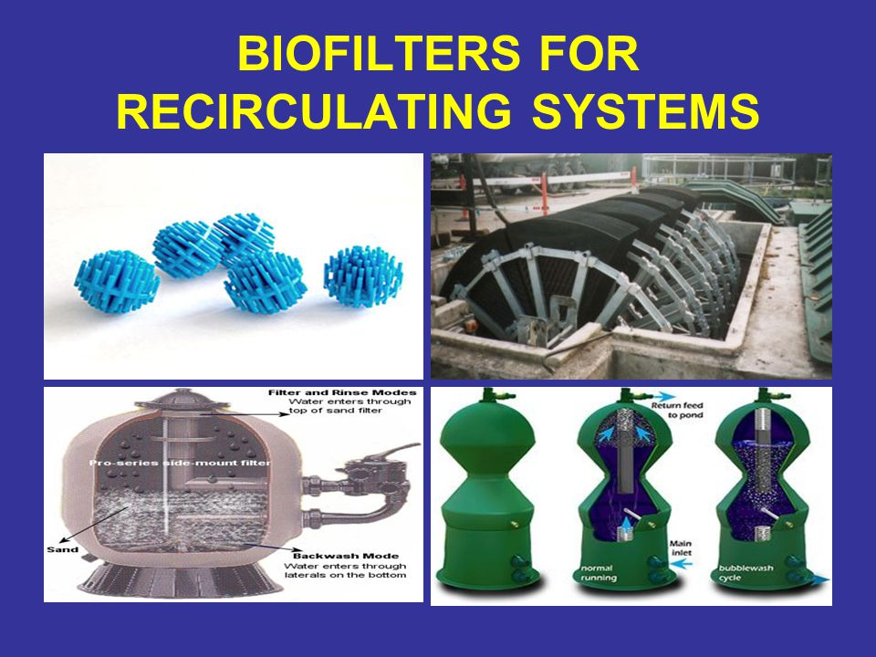 BIOFILTERS FOR RECIRCULATING SYSTEMS