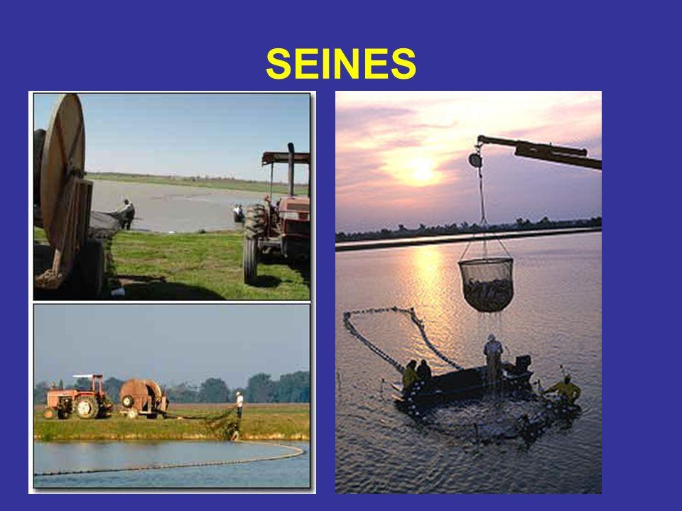 SEINES