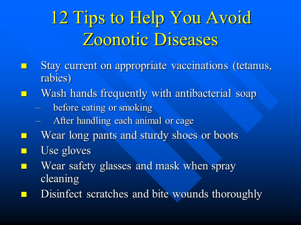 12 Tips to Help You Avoid Zoonotic Diseases