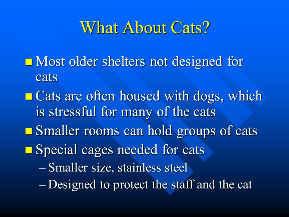 What About Cats Most older shelters not designed for cats