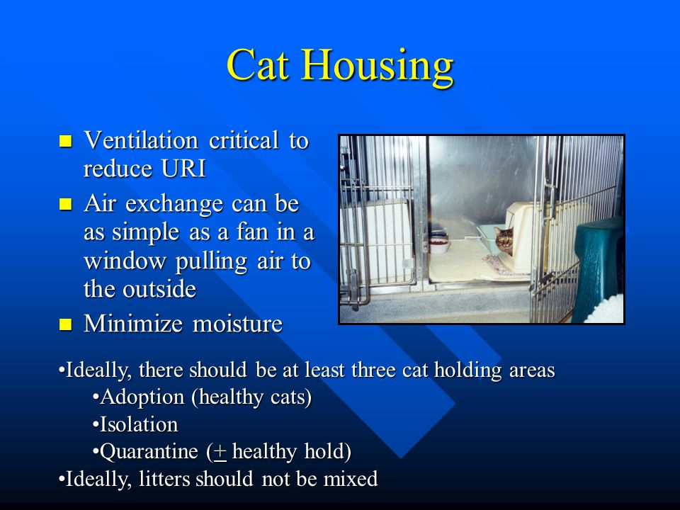 Cat Housing Ventilation critical to reduce URI