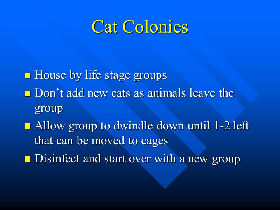 Cat Colonies House by life stage groups