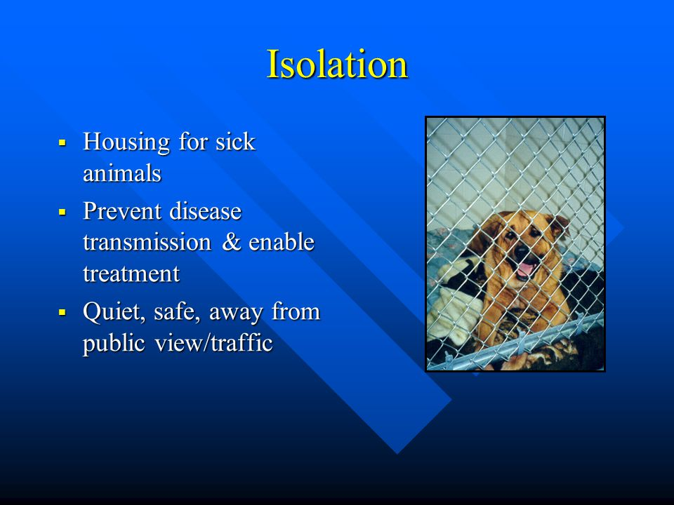 Isolation Housing for sick animals