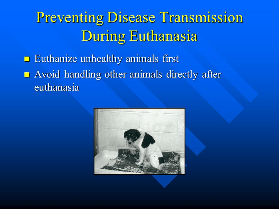 Preventing Disease Transmission During Euthanasia
