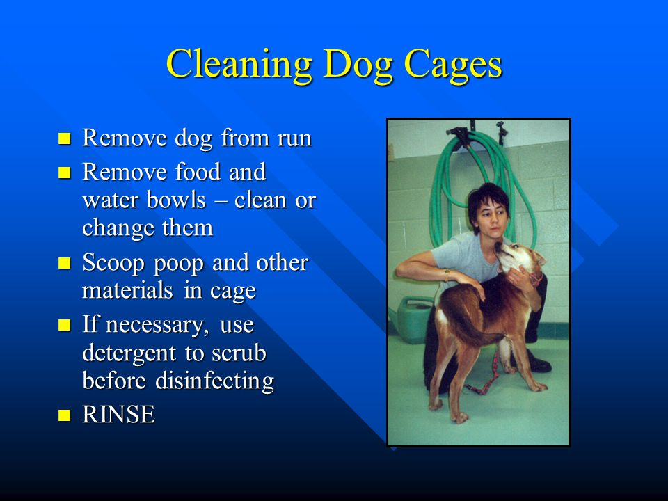Cleaning Dog Cages Remove dog from run