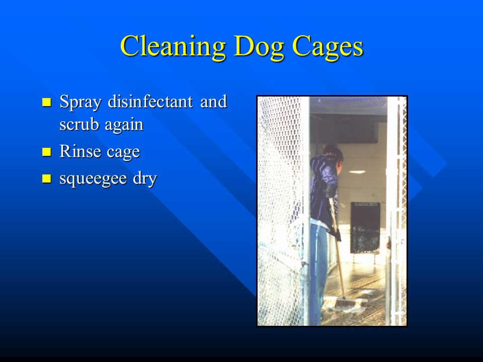 Cleaning Dog Cages Spray disinfectant and scrub again Rinse cage