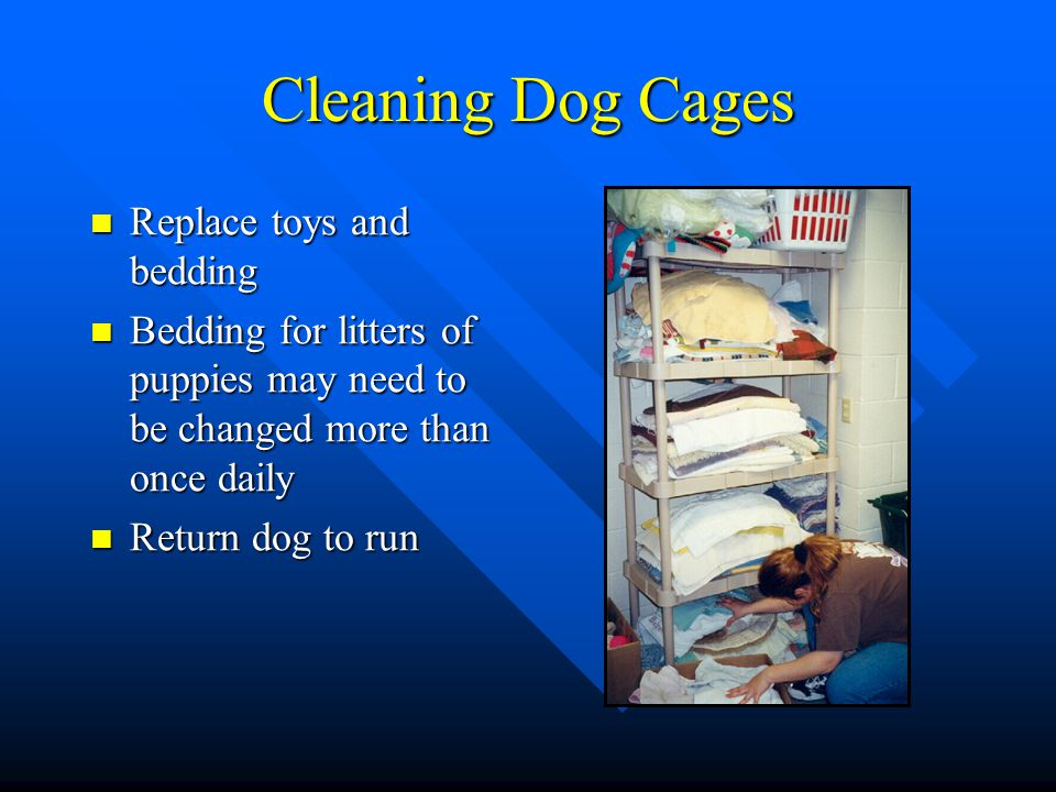 Cleaning Dog Cages Replace toys and bedding