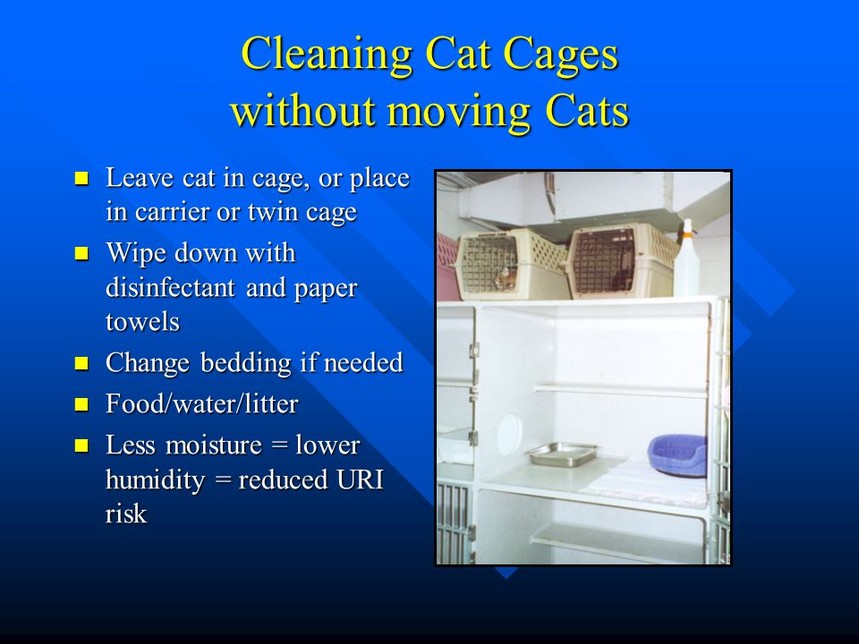 Cleaning Cat Cages without moving Cats