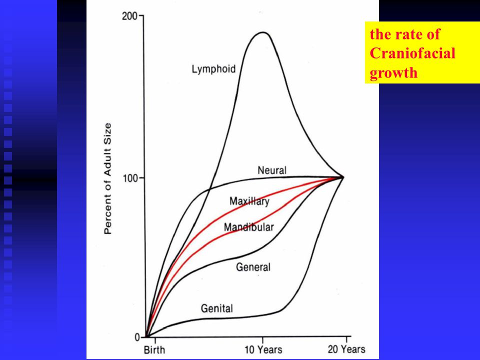 the rate of Craniofacial growth