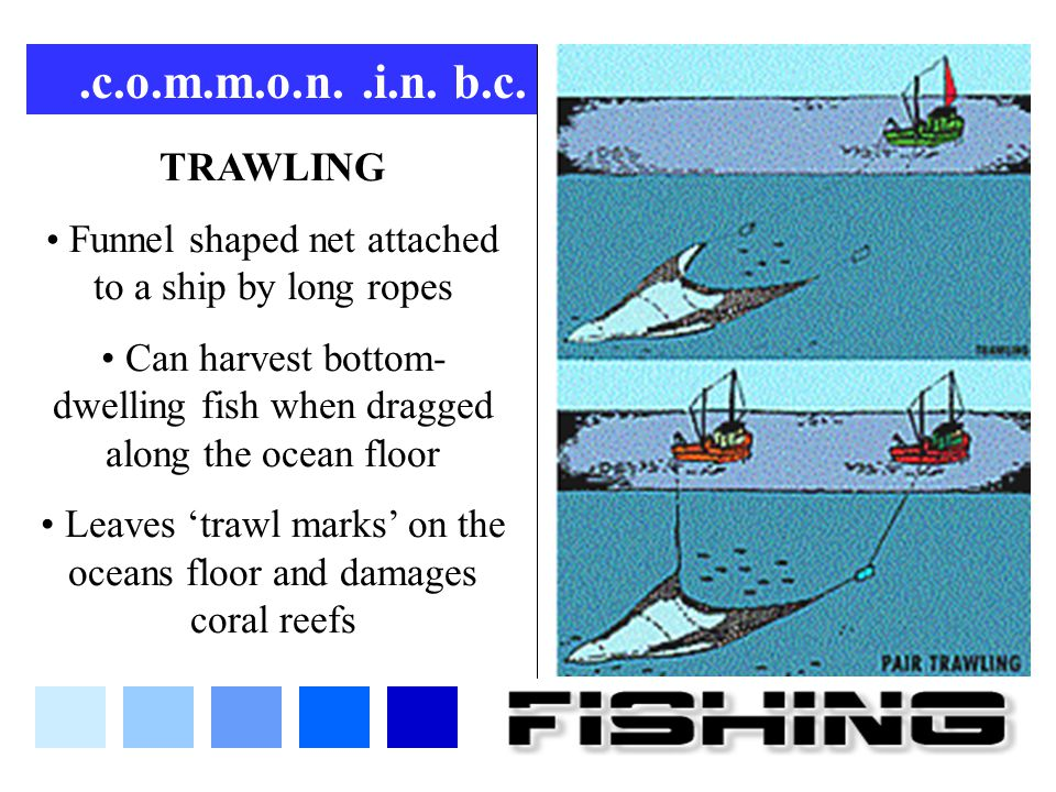 .c.o.m.m.o.n. .i.n. b.c. TRAWLING. Funnel shaped net attached to a ship by long ropes.
