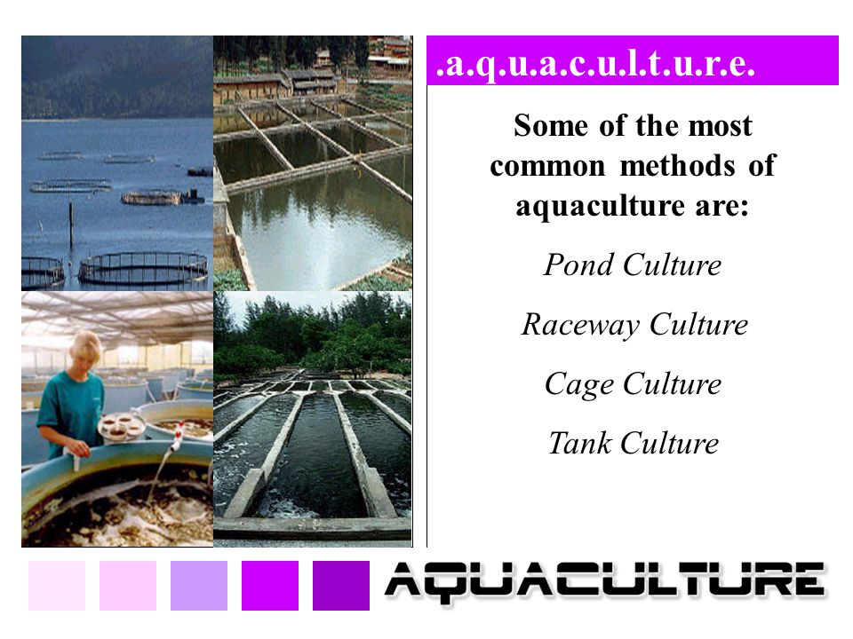 Some of the most common methods of aquaculture are: