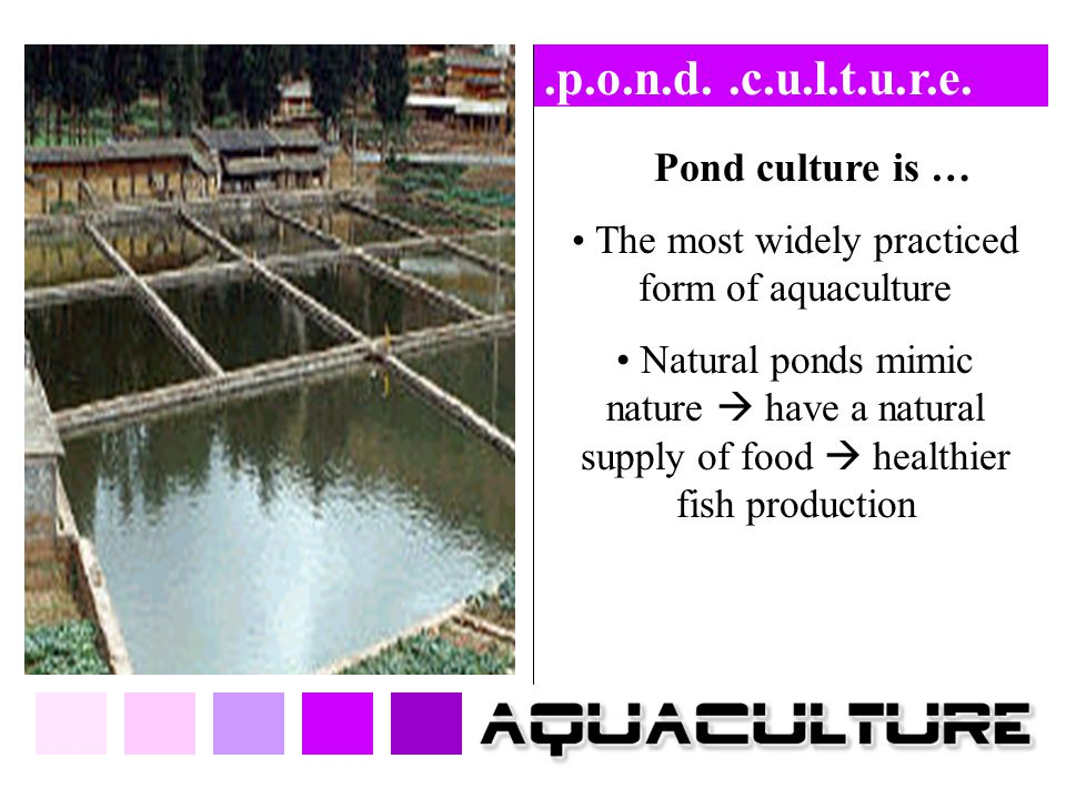 The most widely practiced form of aquaculture