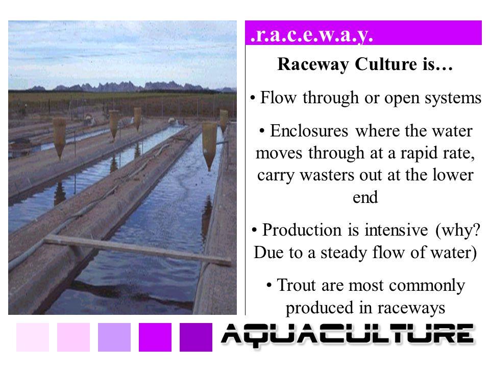 .r.a.c.e.w.a.y. Raceway Culture is…