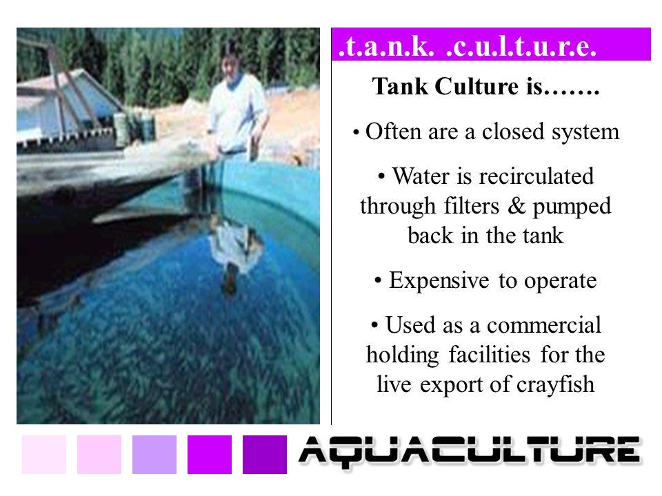 .t.a.n.k. .c.u.l.t.u.r.e. Tank Culture is…….