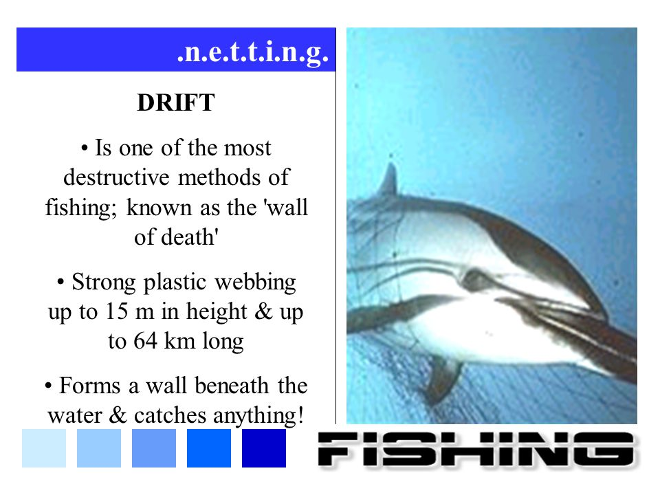 .n.e.t.t.i.n.g. DRIFT. Is one of the most destructive methods of fishing; known as the wall of death