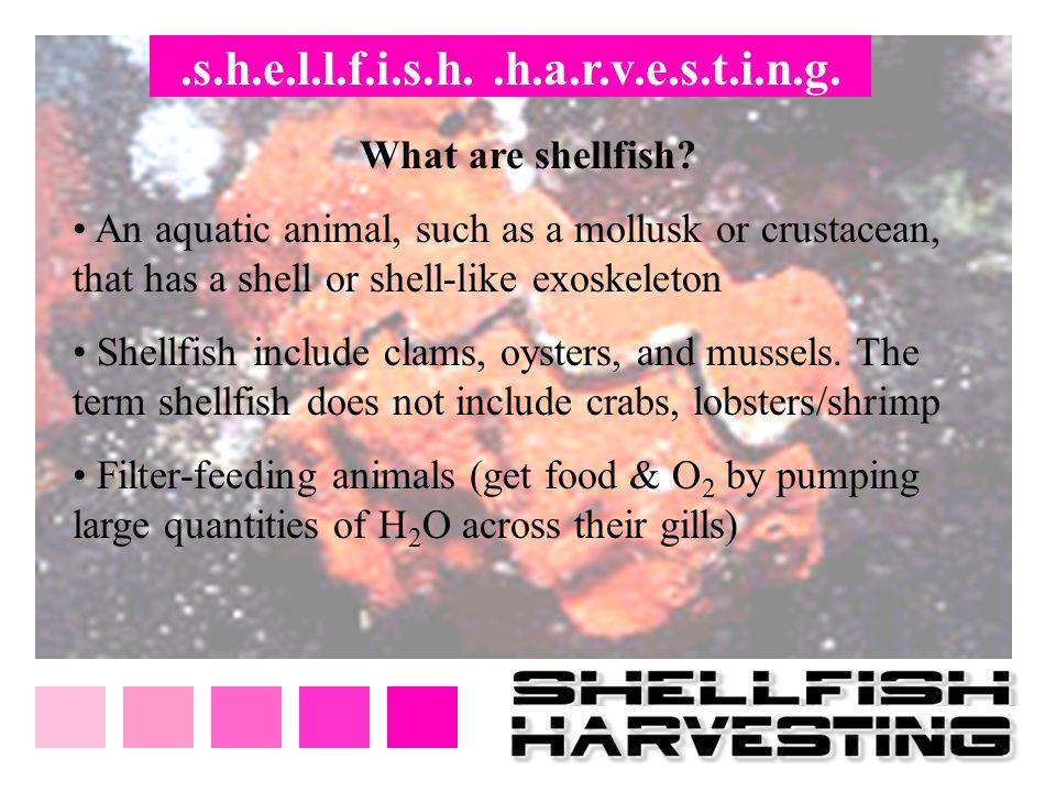 .s.h.e.l.l.f.i.s.h. .h.a.r.v.e.s.t.i.n.g. What are shellfish
