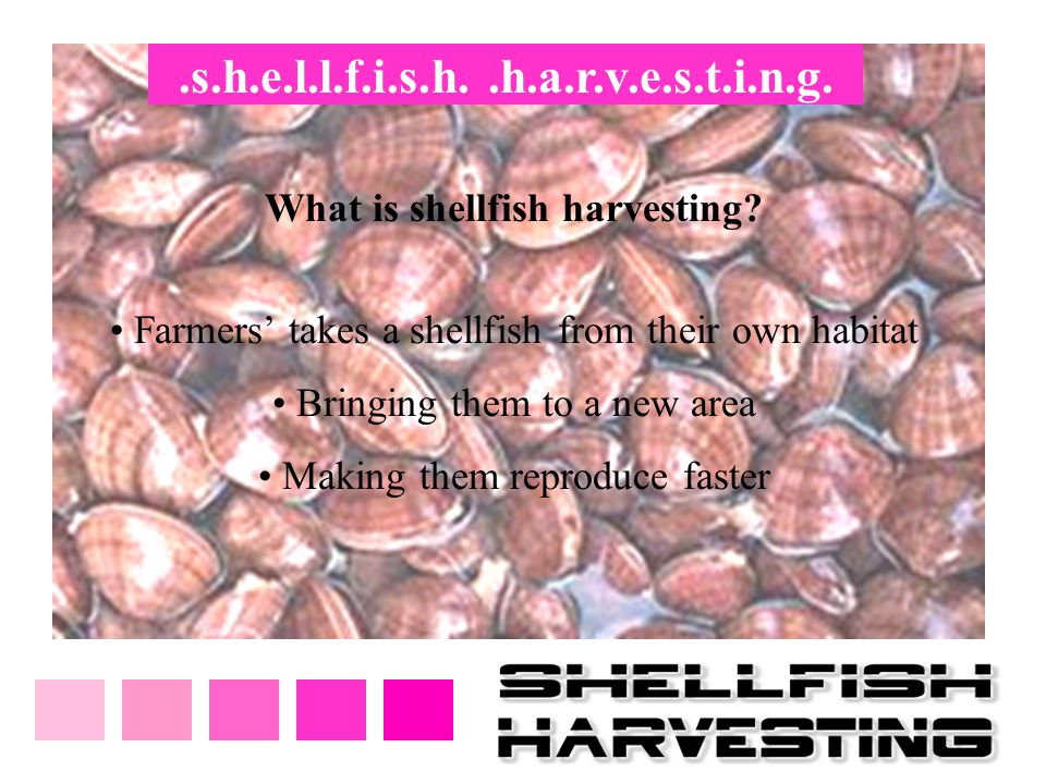 .s.h.e.l.l.f.i.s.h. .h.a.r.v.e.s.t.i.n.g. What is shellfish harvesting Farmers' takes a shellfish from their own habitat.
